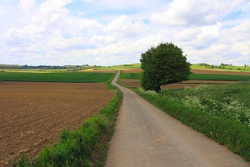 Uitgestrekt landschap van Judith van Bilsen