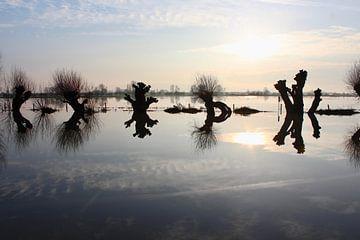 Knotwilgen bij hoog water in Oosterbeek van Ingrid Meuleman