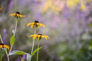bloemen part 7 van Tania Perneel