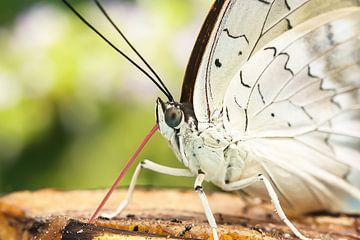 Macro van een vlinder in Vlindorado van Lindy Hageman
