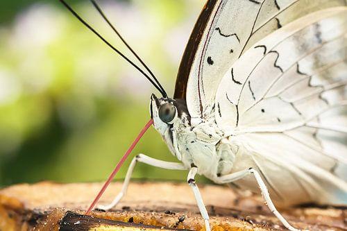Vlinder macro van Lindy Hageman