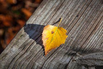 Herfstblad op een bankje van Nel Diepstraten