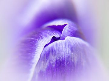 Kissing spring