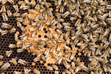 Honing in de maak van André Dorst