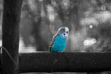 Eenzame vogel von Laurens Rijswijk