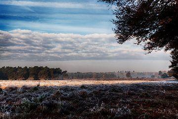 Herbst in der Veluwseheide von Tim Annink