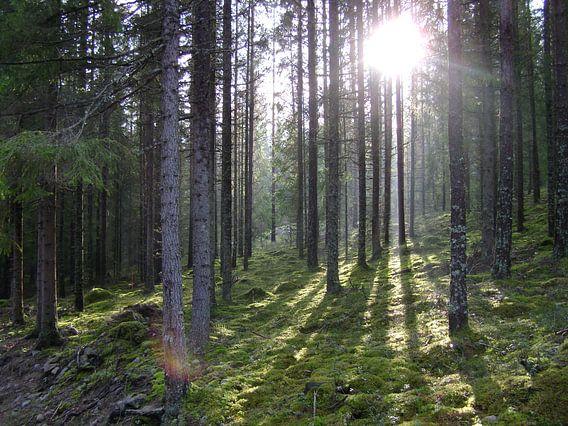 Zweden natuur bos van Hyppy Picture