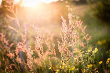 Natuur in bloei van Yvette Smink