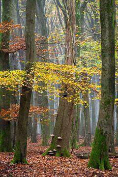 Herbstfarben von Lars van de Goor