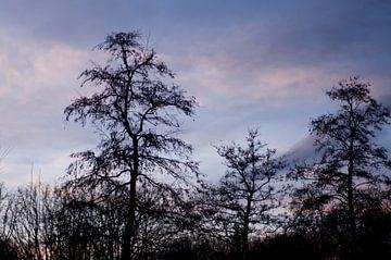 Zonsondergang in het park van Anita van Hengel
