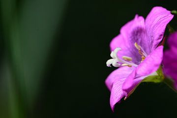 Een paarse bloem van Gerard de Zwaan