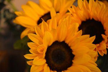 Zonnebloemen van Ima Rhebok