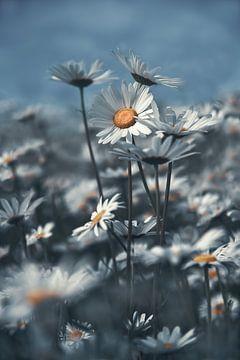 Feldblumen von Piotr Aleksander Nowak