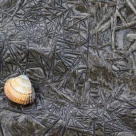 Herzmuschel-Schale von AGAMI Photo Agency