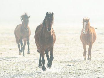 Horses running von Erik Veldkamp