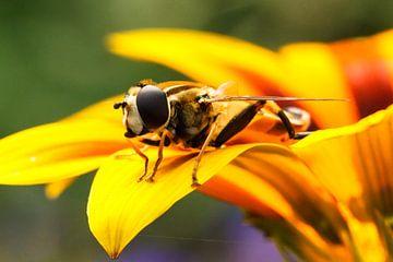 Insect op bloem von Robin Velderman