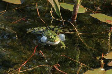 Quakender Frosch von Bärbel Severens