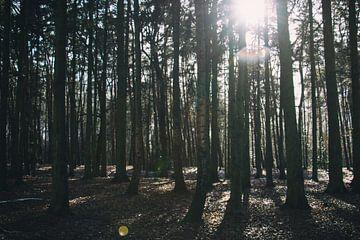 Door de bomen von Simon Peeters