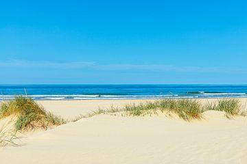 Dünen am Strand mit Strandgras während eines schönen Sommers da von Sjoerd van der Wal