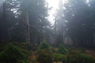 Nebel im Wald von Alena Holtz