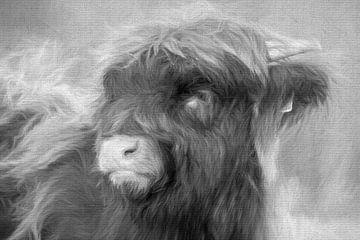 Schotse Hooglander (kalf) van Francis Dost