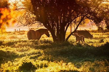 wild horses van anouk smit