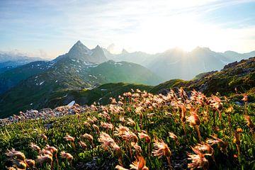 Bloemen in de Lechvallei met uitzicht op de Valluga van Leo Schindzielorz
