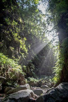 Sonnenschein im Tal von Pierre Verhoeven