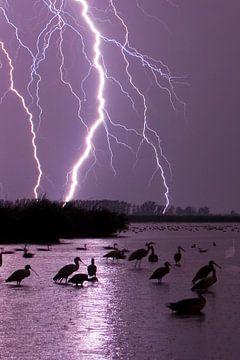 Bliksem over meer, sur AGAMI Photo Agency
