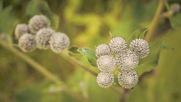 Stachelige Pflanze von Marianne Twijnstra-Gerrits