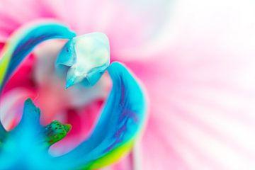 Blauwroze vlinderorchidee van Leontien van der Willik-de Jonge