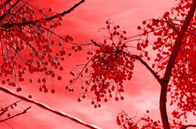 Red fruit van Edith van Aken