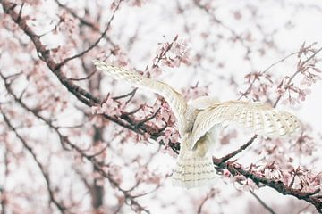 Spring has arrived sur Elianne van Turennout