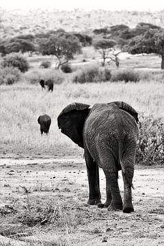 Schwarz-weißer Elefant von Bart van Mastrigt