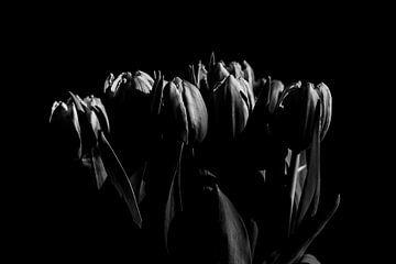 Tulpen in Schwarz-Weiß von Tamara Geluk
