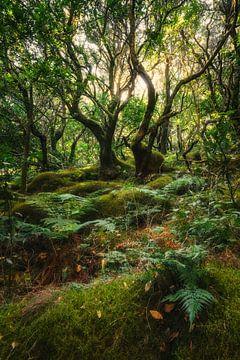 Tweelingbomen van Joris Pannemans - Loris Photography