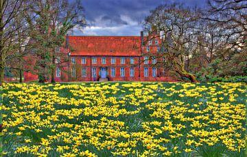 Narzissenblüte 2 van Edgar Schermaul
