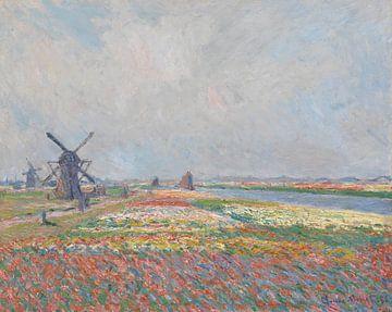 Tulip Fields near The Hague, Claude Monet