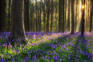 Het paarse bos