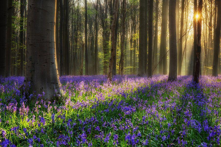 Het paarse bos van Edwin Mooijaart