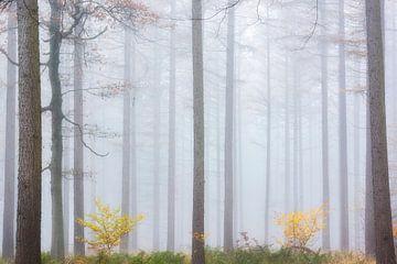 serene mistige herfstochtend van Francis Dost