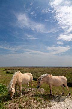 Pferde auf Juist von Dirk Rüter