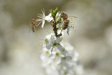 Insecten samen op meidoorn van Klaas Dozeman