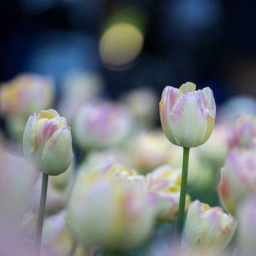 tulpen in pasteltint 3 van Leontien van der Willik-de Jonge