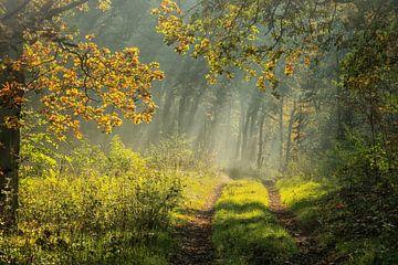 Am frühen Morgen von Pascal Raymond Dorland