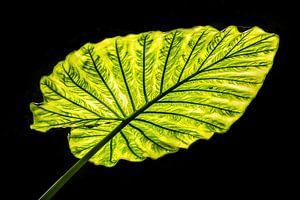 Groen blad in Tegenlicht