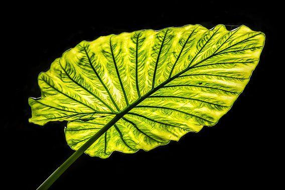 Groen blad in Tegenlicht van Harrie Muis