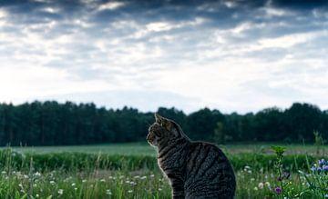 Katze - Die Ruhe vor der Jagd von Patricia Piotrak