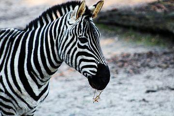 Portret Zebra - zebrahead  von Danielle de Grave