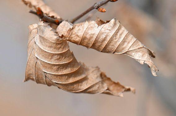Letzte Blätter  van Violetta Honkisz